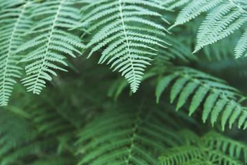 green ferns close up