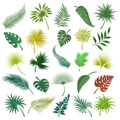 Illustrated palm exotic green leaves isolated on white background. Hand drawing tropical jungle coconut leaf set isolated on white background. Vector illustration