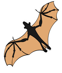 Flying Fox bat in flight