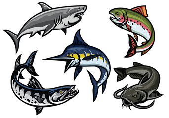 set of fish illustration in colored