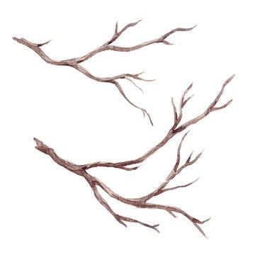 Watercolor fall tree branch