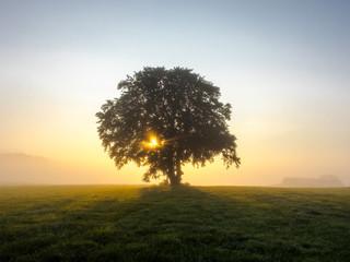 Sonnenlicht bricht sich im Baum