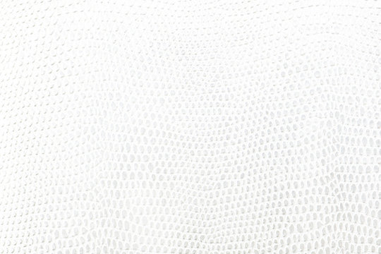 White snake Leather background texture