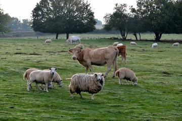 Animaux dans les champs