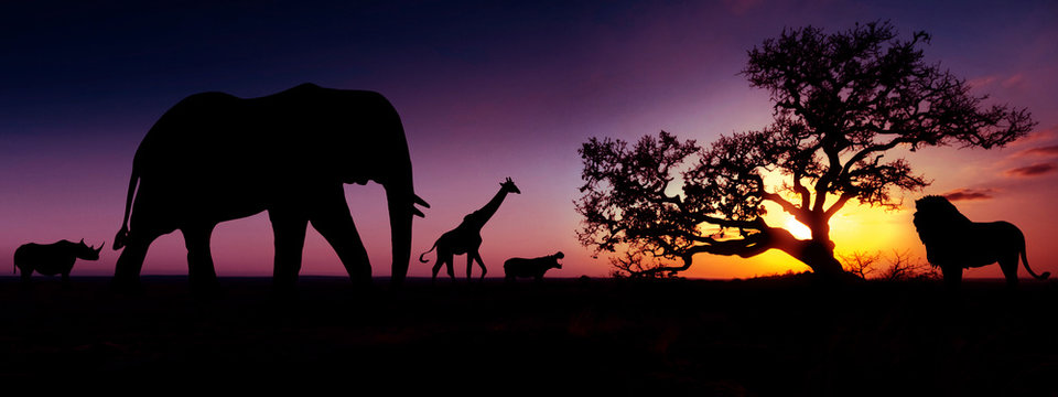 Famous african animals sunset silhouettes