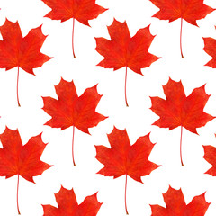 pattern maple leaf red autumn