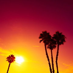 Palm trees silhouettes at vivid colorful summer sunset light