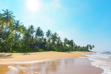 Beautiful empty beach on tropical island with coconut palm trees and clean sand at clear sunny summer day