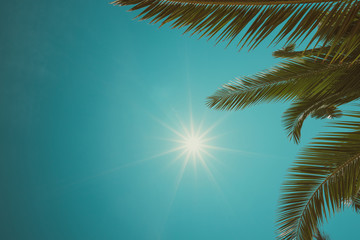 Vintage toned palm trees border composition with shining sky