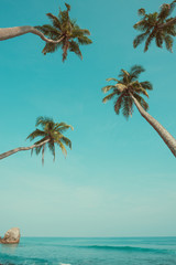 Vintage toned palm trees hanging over ocean on the tropical island beach
