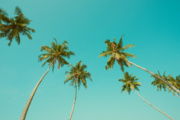 Vintage toned palm trees and blue sky