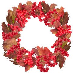 Red snowball tree berry wreath isolated on white