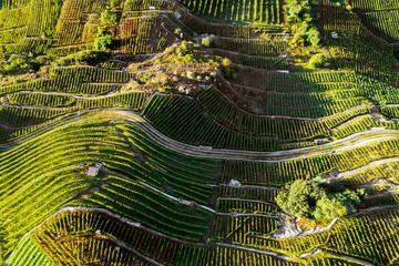 Castionetto di Chiuro - Valtellina (IT) - vigneti - Vista aerea