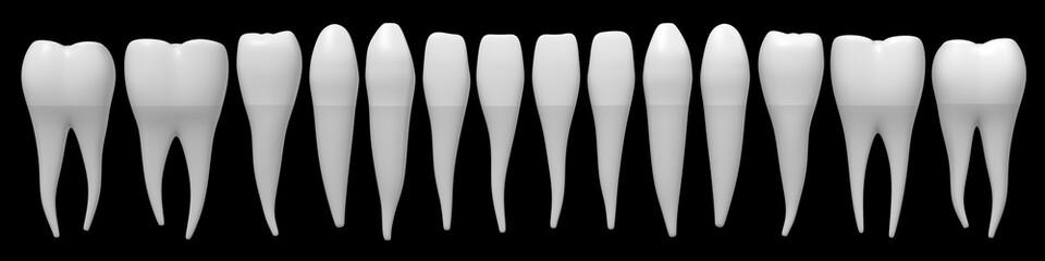 3D healthy human teeth