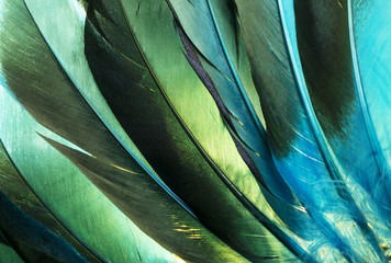 Photo sur Aluminium Les Textures Native American Indian turquoise feathers. This is a colorful macro photo of some turquoise and green duck feathers from a Native American Indian costume.