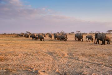 Elefanten-Herde im Amboseli Nationalpark