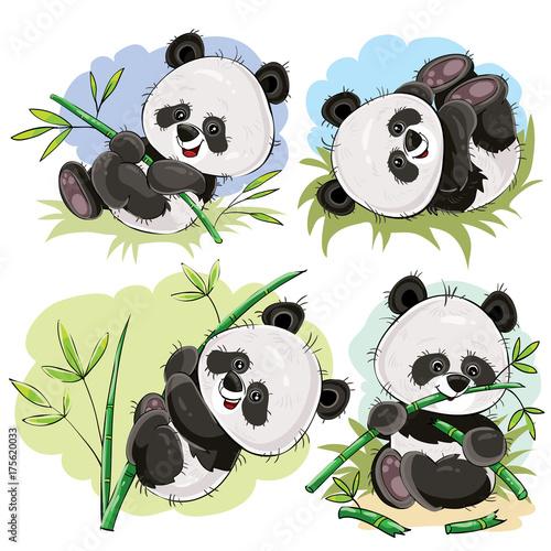 Funny Panda Bear Baby Playing On Grass Climbing On Bamboo Stem