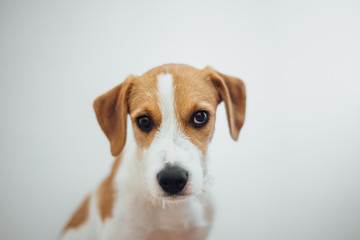 Portrait of young dog against the white wall