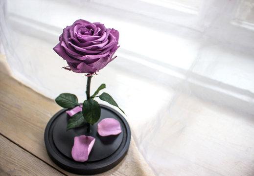 Purple rose in a glass flask