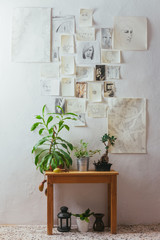Plants on a wooden table with drawings on a white wall