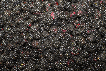 Blackberry as background