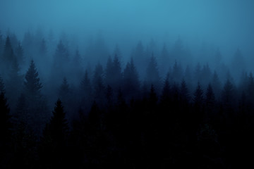 The forest of coniferous trees the fir in the fog. Vintage style. Silhouettes of trees in the fog of a blue hue. artistic photo.