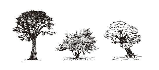 Three trees hand drawn sketch.