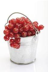 Small tin pail filled with red currants