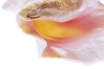Seashell - closeup
