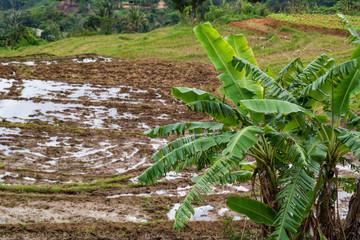Scenic view of mountain village in Sri Lanka