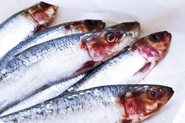 Sardines (Sardina pilchardus), raw