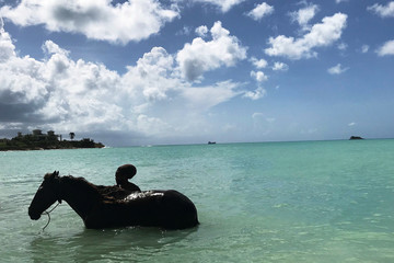 A man is seen in silhouette bathing a horse in Dickenson Bay a month after Hurricane Irma struck the Caribbean island near St. Johns