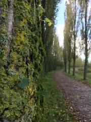 Weg durch die Naturlandschaft