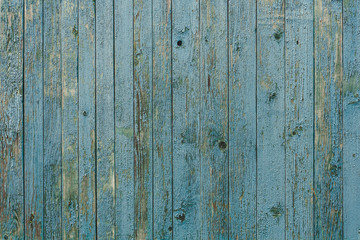 Vintage wood background with blue peeling paint.