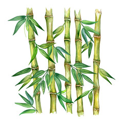 Bamboo plant isolated on white background. Watercolor. Illustration. Template. Picture. Picture
