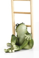 Frog sitting in front of a ladder