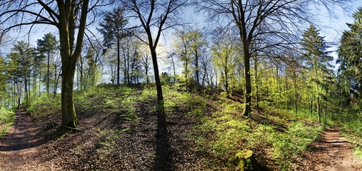 Panoramic view of a bright mixed forest in spring