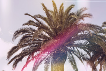 top of palm tree with light leak