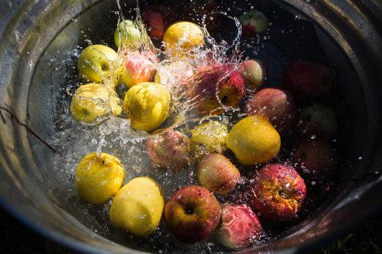 Apples in water - digital file