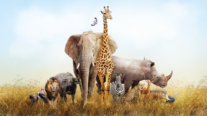Fototapete - Safari Animals in Africa Composite