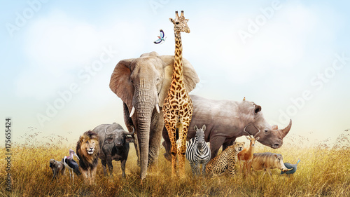 Wall mural Safari Animals in Africa Composite