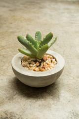 Tiny Plant in a Concrete Pot