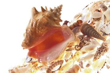 Flotsam - seashells