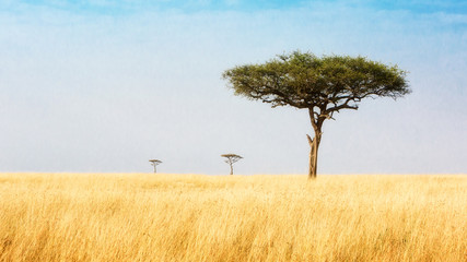 Trees in Grasslands of Kenya Africa