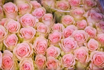 Bouquet of roses, Floating Flower Market, Singel Canal, Amsterdam, Netherlands, Europe