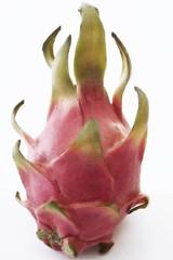 Dragonfruit plant (Hylocereus undatus)