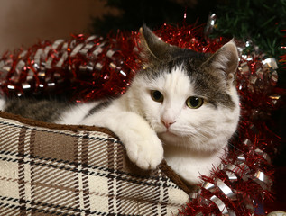 cat in catbad bad with christmas tinsel adornment close up photo