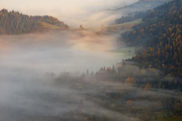 Pieniny misty forest