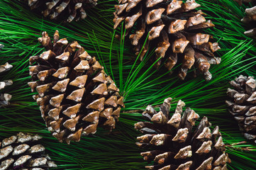 Pine Cones on Gathered Pine