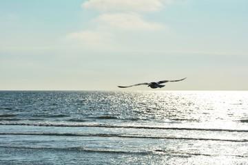 Möwe fliegt über dem Meer beim Sonnenuntergang